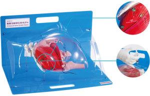 臀部肌肉注射部位3D模型