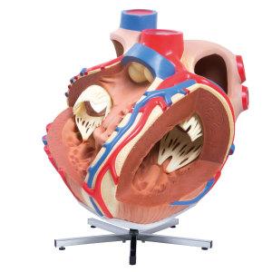 巨型心臟模型-實物的8倍